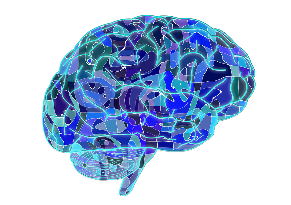 http___pluspng.com_img-png_brain-hd-png-brain-biology-abstract-cerebrum-science-anatomy-960